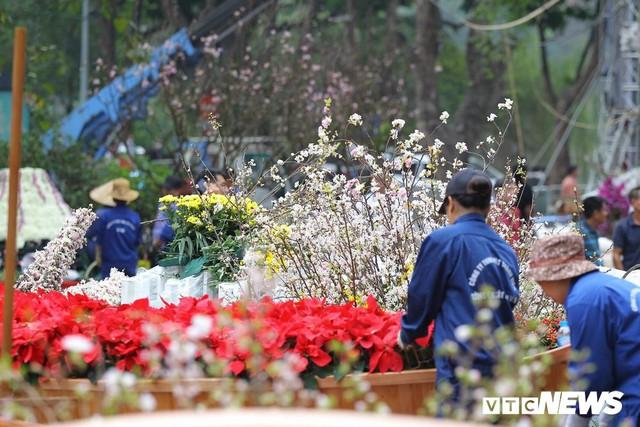 Ảnh: 40.000 cành hoa anh đào chuyển từ Nhật Bản tới Hà Nội - Ảnh 2.