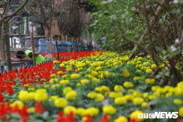 Ảnh: 40.000 cành hoa anh đào chuyển từ Nhật Bản tới Hà Nội - Ảnh 11.