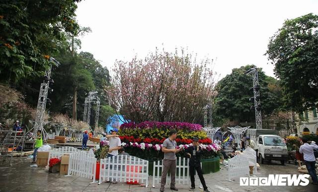 Ảnh: 40.000 cành hoa anh đào chuyển từ Nhật Bản tới Hà Nội - Ảnh 12.