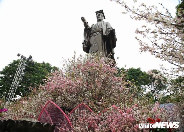 Ảnh: 40.000 cành hoa anh đào chuyển từ Nhật Bản tới Hà Nội - Ảnh 7.