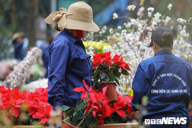 Ảnh: 40.000 cành hoa anh đào chuyển từ Nhật Bản tới Hà Nội - Ảnh 10.