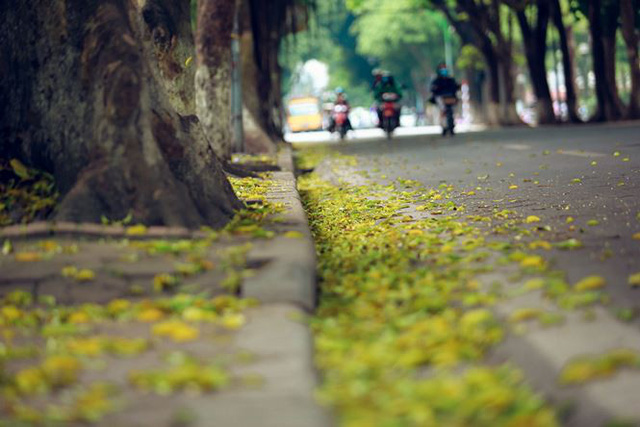 Phố phường Hà Nội đẹp nao lòng mùa lá rụng - Ảnh 9.