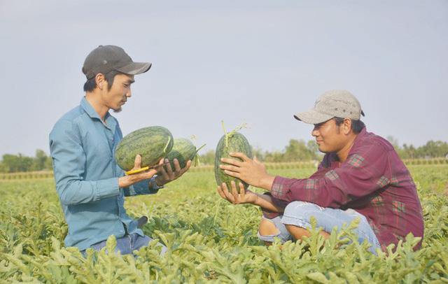 Nắng cháy da, nông dân vẫn tươi cười vì được mùa dưa hấu ngọt  - Ảnh 5.