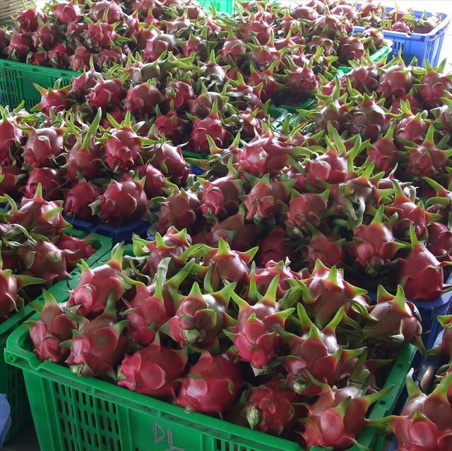 Lý giải dưa hấu trồng ở Việt Nam được lên tem Trung Quốc tại vườn - Ảnh 1.