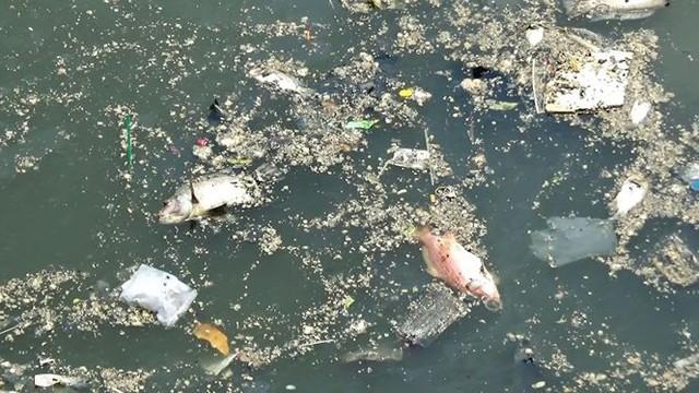 Cá lại chết nổi trắng kênh Nhiêu Lộc - Thị Nghè sau mưa  - Ảnh 1.