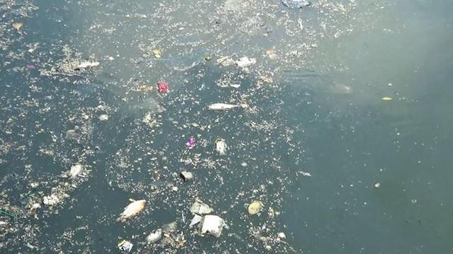 Cá lại chết nổi trắng kênh Nhiêu Lộc - Thị Nghè sau mưa  - Ảnh 4.