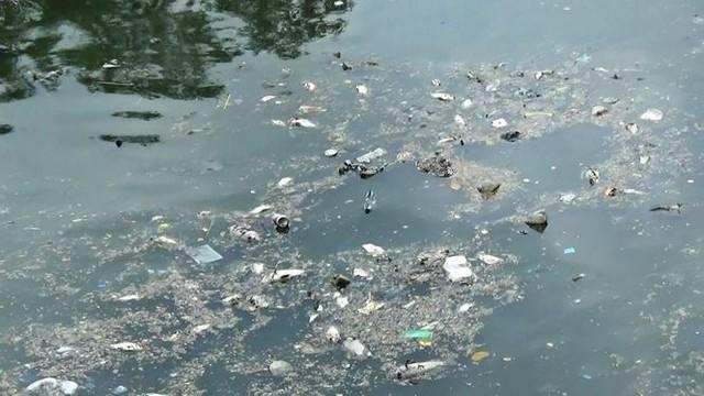 Cá lại chết nổi trắng kênh Nhiêu Lộc - Thị Nghè sau mưa  - Ảnh 6.