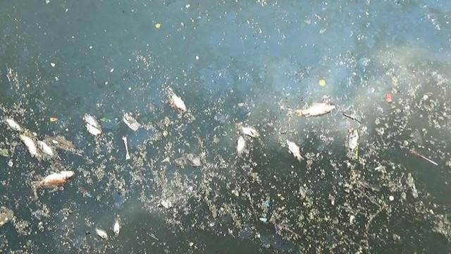 Cá lại chết nổi trắng kênh Nhiêu Lộc - Thị Nghè sau mưa  - Ảnh 7.