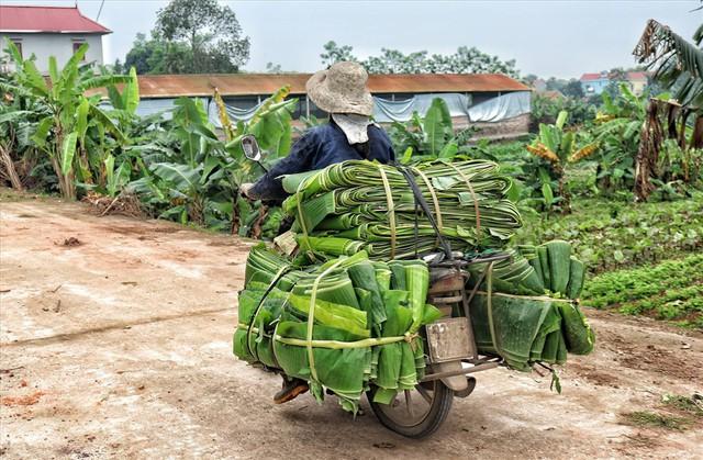 Lá chuối thay nilon, người dân kiếm bạc triệu từ nghề chặt lá chuối - Ảnh 11.