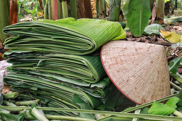 Lá chuối thay nilon, người dân kiếm bạc triệu từ nghề chặt lá chuối - Ảnh 10.