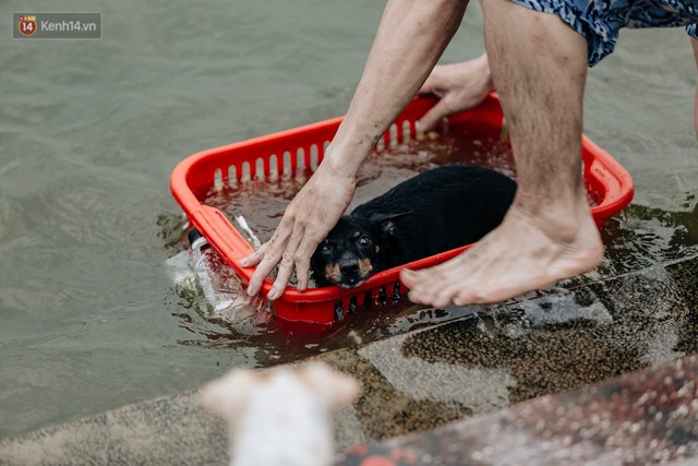 Hà Nội oi nóng ngộp thở, nhiều người mang theo cả thú cưng ra Hồ Tây tắm bất chấp biển cấm - Ảnh 21.
