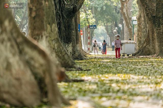 Mùa lá sấu tung bay, người dân kéo tới chụp ảnh ở con đường lãng mạn nhất Thủ đô dù nắng nóng 40 độ C - Ảnh 11.
