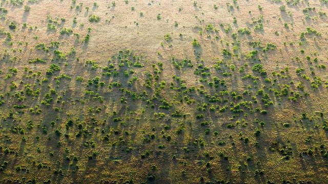 Điều chưa từng có ở châu Phi: Bức tường xanh khổng lồ dài hơn 8.000km trải dài qua 20 nước - Ảnh 1.