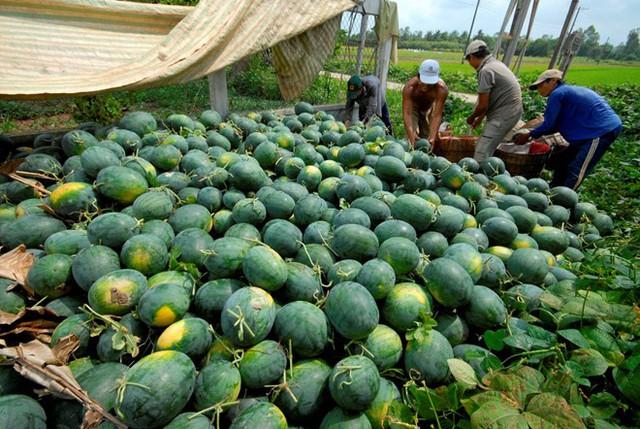 Nâng cao chất lượng nông sản Việt, mở cánh cửa vào thị trường Trung Quốc  - Ảnh 1.