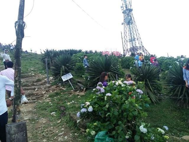 Người dân ùn ùn đổ về ngắm hoa, đường lên Mẫu Sơn tắc hàng km - Ảnh 3.