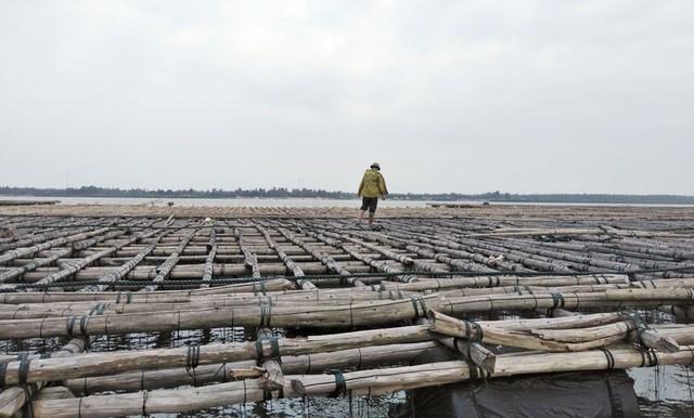 Quảng Ninh: Hàng trăm tấn hà nuôi chết bất thường, ngư dân xót lòng - Ảnh 2.