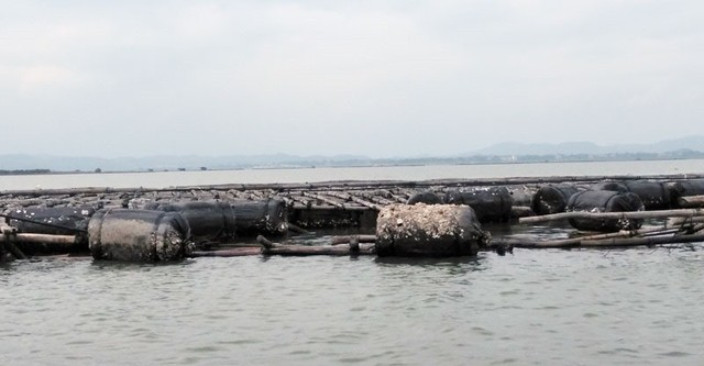 Quảng Ninh: Hàng trăm tấn hà nuôi chết bất thường, ngư dân xót lòng - Ảnh 5.