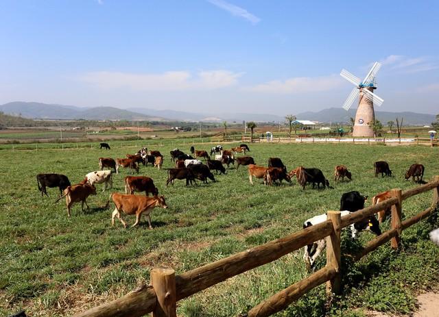 Vinamilk đã có những bước tiến dài sau hơn 2 năm làm sữa organic - Ảnh 3.