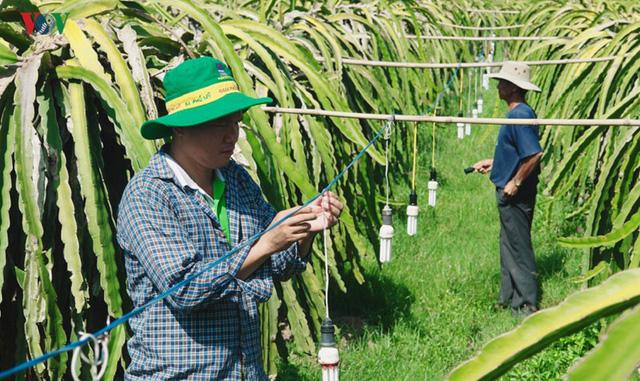 Tăng giá điện, người trồng Thanh Long đứng ngồi không yên - Ảnh 3.