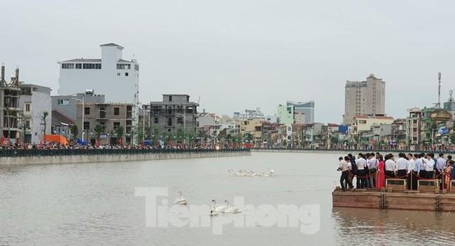 Nghìn người đổ xô đi xem thiên nga trên sông Tam Bạc - Ảnh 5.
