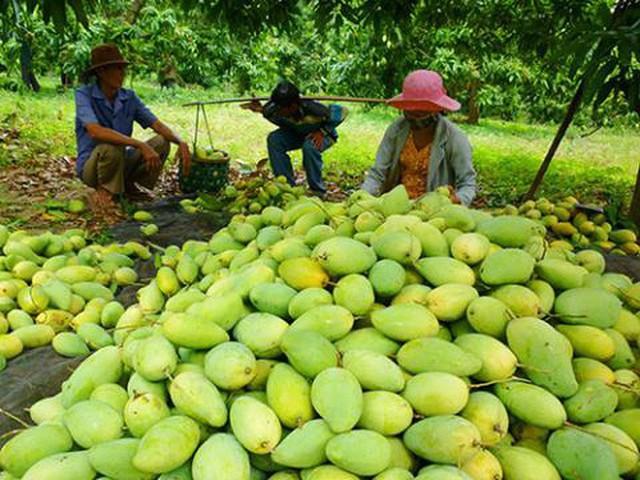 Nhiều tín hiệu vui cho xuất khẩu trái cây Việt Nam - Ảnh 1.