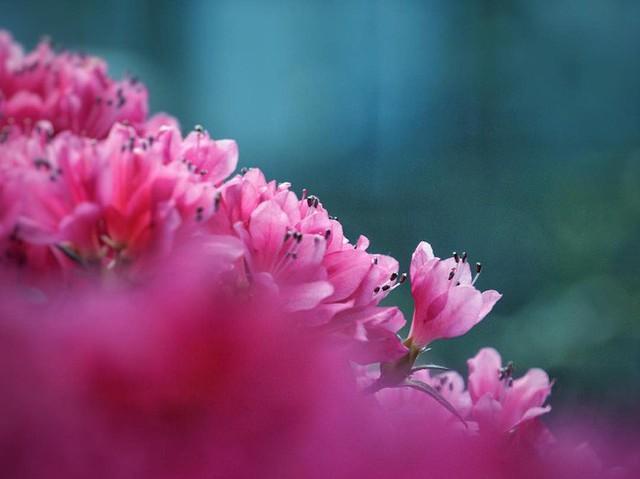 """Sau Jewel Changi, Singapore lại có thêm """"kỳ quan"""" vườn hoa treo khổng lồ khiến dân tình phải ngước lên """"mỏi cả cổ"""" để ngắm nhìn - Ảnh 21."""