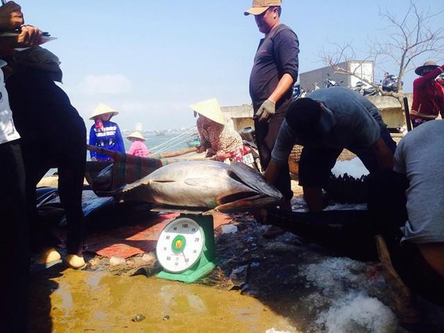 Tàu cá thua lỗ vì giá cá ngừ giảm sâu, giá xăng dầu tăng mạnh - Ảnh 1.