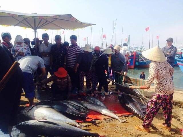 Tàu cá thua lỗ vì giá cá ngừ giảm sâu, giá xăng dầu tăng mạnh - Ảnh 2.