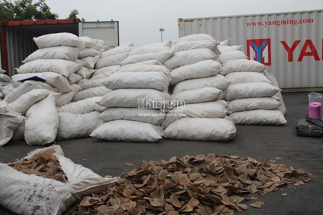 Bắt hơn 8 tấn vảy tê tê tại cảng Hải Phòng lớn nhất từ trước đến nay - Ảnh 1.