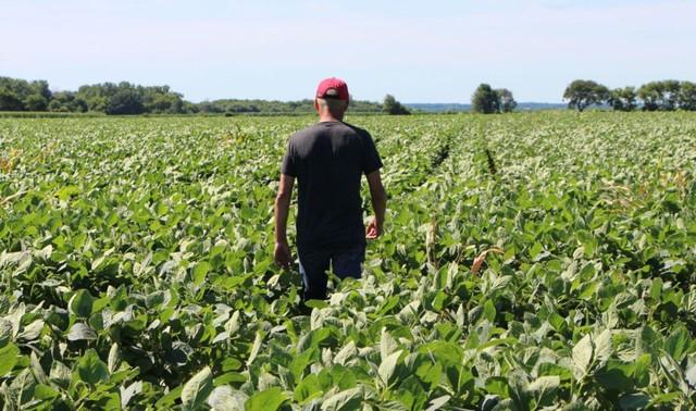 'Cơn đau dai dẳng' của nông dân Mỹ trong cuộc chiến thương mại với Trung Quốc - Ảnh 1.