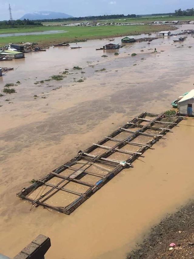 Cá nuôi bè trên sông La Ngà chết hàng loạt - Ảnh 1.