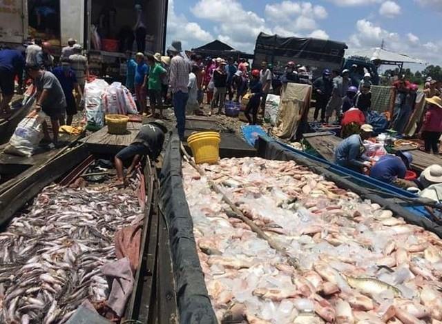 Cá nuôi bè trên sông La Ngà chết hàng loạt - Ảnh 2.