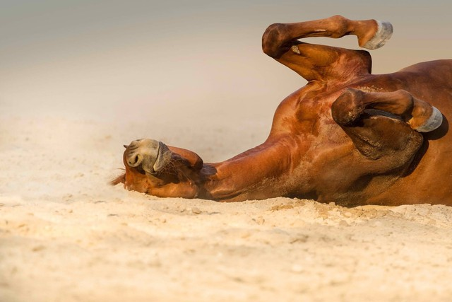 Tại sao nắng nóng có thể gây chết người? Hiểu đúng để sống sót qua những ngày nắng cháy da thịt - Ảnh 2.
