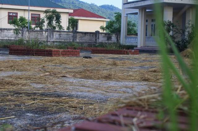Trường hơn 16 tỷ bỏ hoang người dân tận dụng phơi rơm nuôi gà - Ảnh 12.