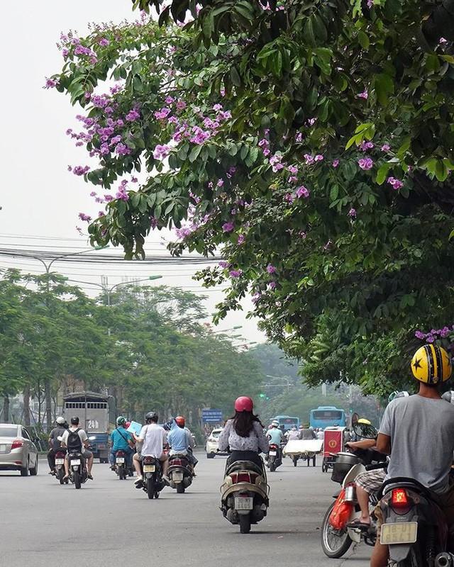 Hoa sữa, hoa phượng cùng bằng lăng nở rộ đường phố Hà Nội - Ảnh 5.
