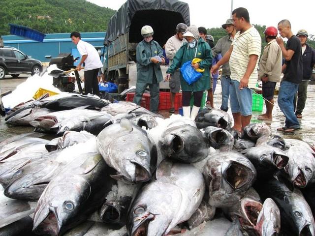 Trung Quốc miễn thuế hơn 30 mặt hàng thủy sản Việt Nam - Ảnh 1.