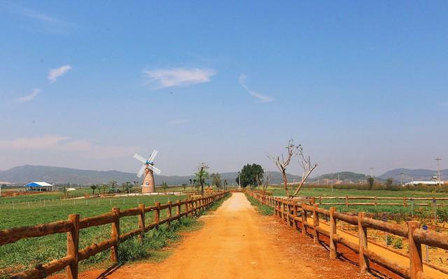 Khám phá trang trại Vinamilk Organic chuẩn châu Âu trên cao nguyên Đà Lạt - Ảnh 1.