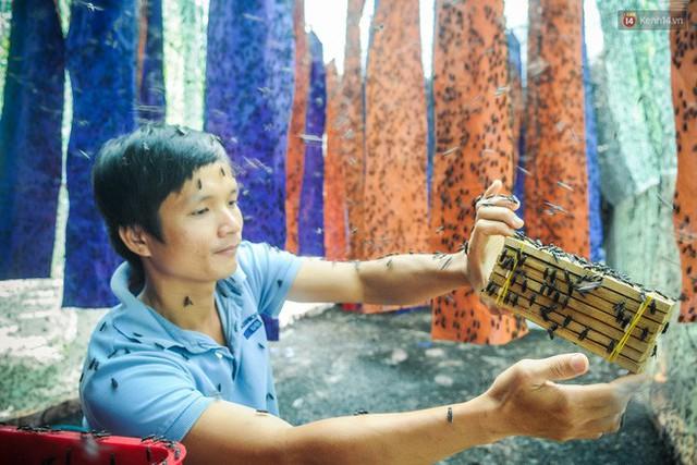 Chàng kỹ sư Sài Gòn bỏ việc về quê nuôi ruồi, doanh thu 80 triệu đồng/tháng: Từng bị gia đình phản đối, bạn bè cười nhạo - Ảnh 4.