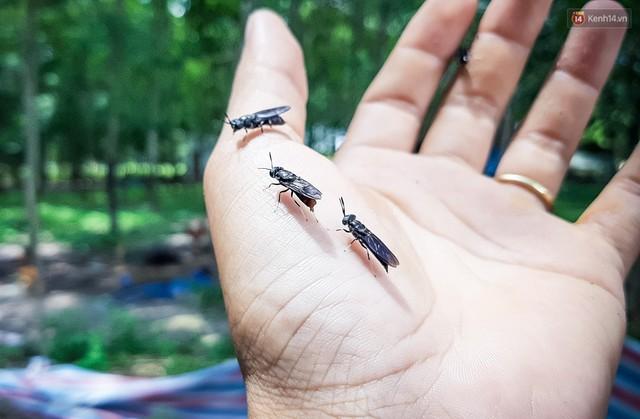 Chàng kỹ sư Sài Gòn bỏ việc về quê nuôi ruồi, doanh thu 80 triệu đồng/tháng: Từng bị gia đình phản đối, bạn bè cười nhạo - Ảnh 17.