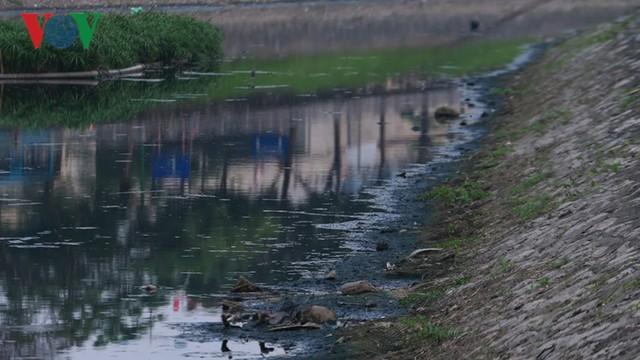 Giải pháp bio-nano của Nhật để làm sạch sông Tô Lịch chỉ là tạm thời - Ảnh 1.
