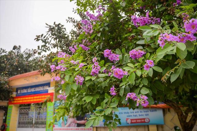 Hoa bằng lăng nhuộm tím phố phường Hà Nội - Ảnh 4.