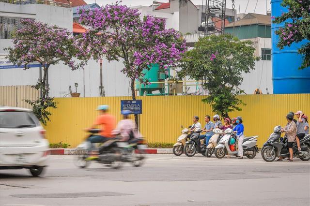 Hoa bằng lăng nhuộm tím phố phường Hà Nội - Ảnh 7.