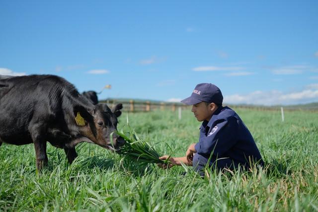 Khám phá trang trại Vinamilk Organic chuẩn châu Âu trên cao nguyên Đà Lạt - Ảnh 9.