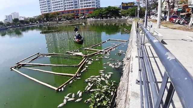Cá chết nổi trắng hồ ở Đà Nẵng do nắng nóng kéo dài - Ảnh 1.