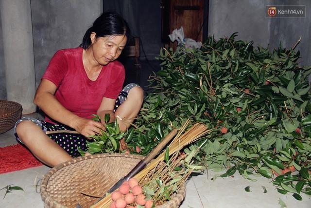 Người dân Bắc Giang dậy từ 3 giờ sáng để bẻ vải, thức xuyên đêm vặt lá cho kịp thời vụ - Ảnh 2.