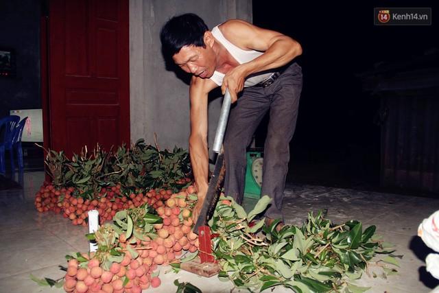 Người dân Bắc Giang dậy từ 3 giờ sáng để bẻ vải, thức xuyên đêm vặt lá cho kịp thời vụ - Ảnh 4.