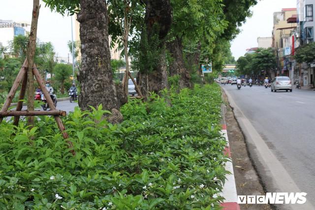 Ảnh: Đường Láng thay đổi bất ngờ, dân Thủ đô cứ ngỡ đang lạc vào đường phố Singapore - Ảnh 5.