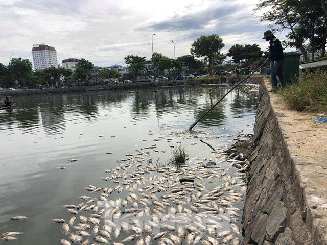 Cá chết trắng hồ điều hòa ở Đà Nẵng do rò rỉ nước thải - Ảnh 1.