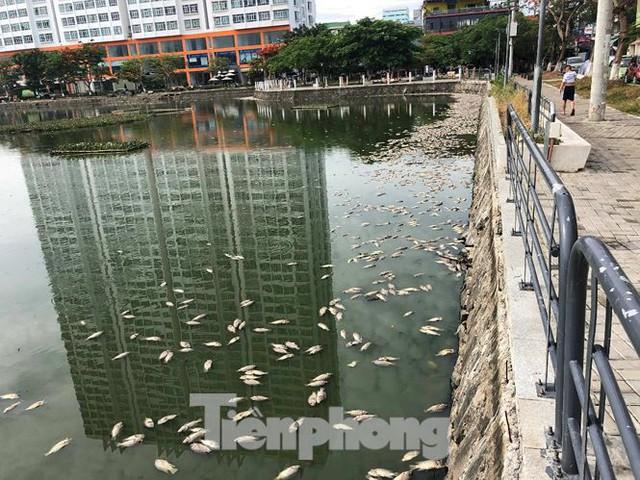 Cá chết trắng hồ điều hòa ở Đà Nẵng do rò rỉ nước thải - Ảnh 2.