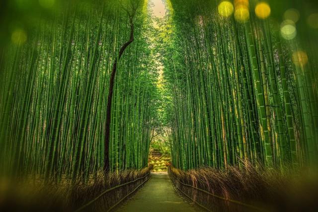 Lạc lối giữa mê cung xanh mướt của rừng tre Sagano: Nơi chứa đựng những âm thanh tinh túy cả Nhật Bản đều muốn bảo tồn - Ảnh 1.